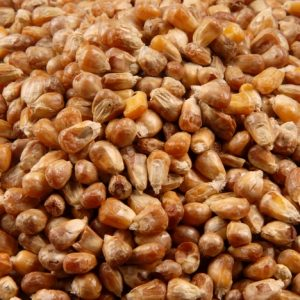 mısır kavurga